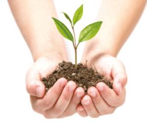 Wicanders Authentica, οικολογικά - φιλικά προς το περιβάλλον και τον άνθρωπο